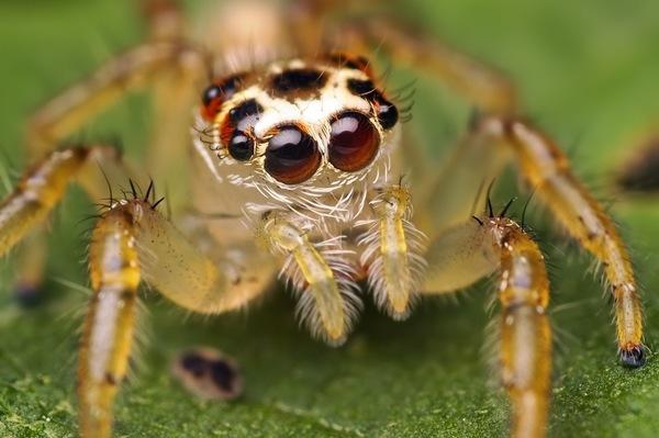 Cuanto vive una araña