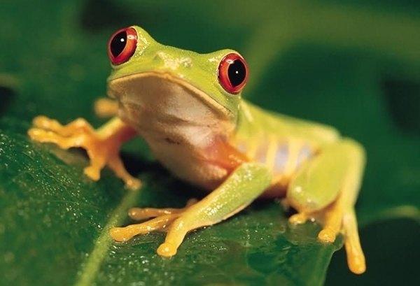Cuanto vive una rana