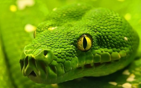 Cuanto vive una serpiente