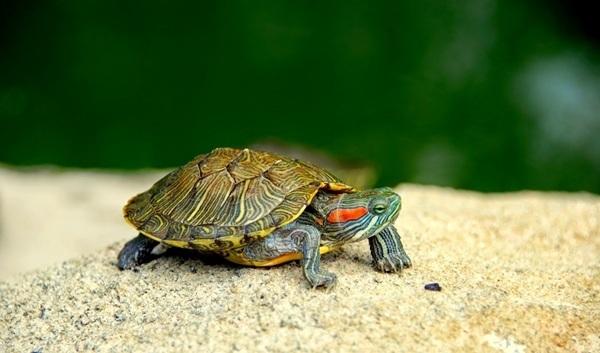 Cuanto vive una tortuga