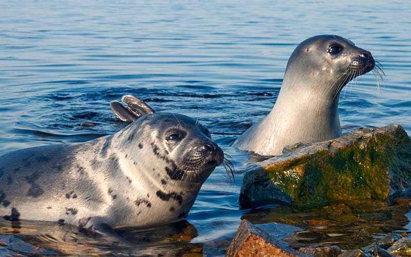 Diferencias entre las focas y los leones marinos