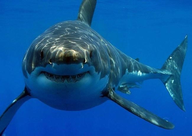 cuanto-vive-un-tiburon