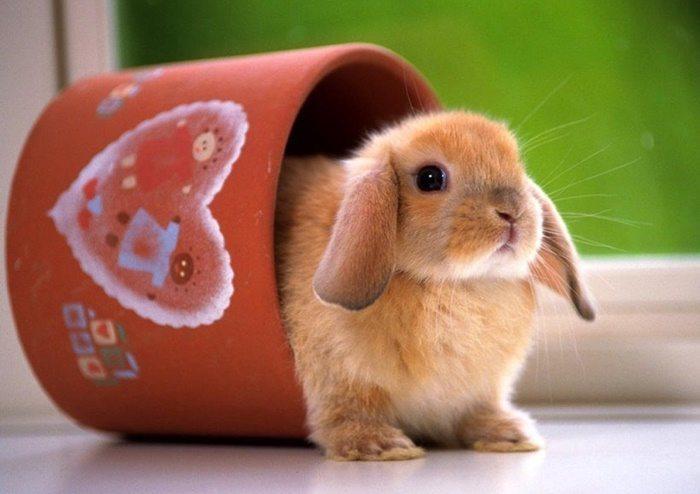 cuanto-vive-un-conejo