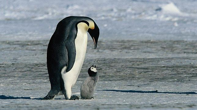 cuanto-vive-un-pinguino