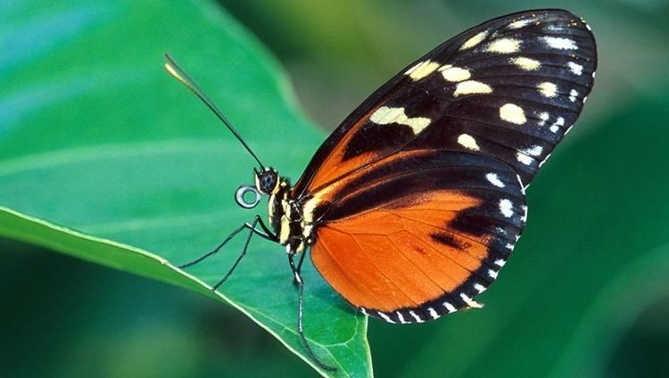 cuanto-vive-una-mariposa